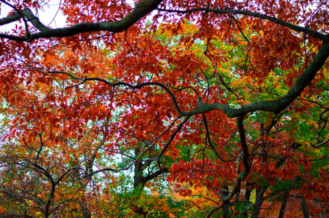 Beautiful fall and its magical colors