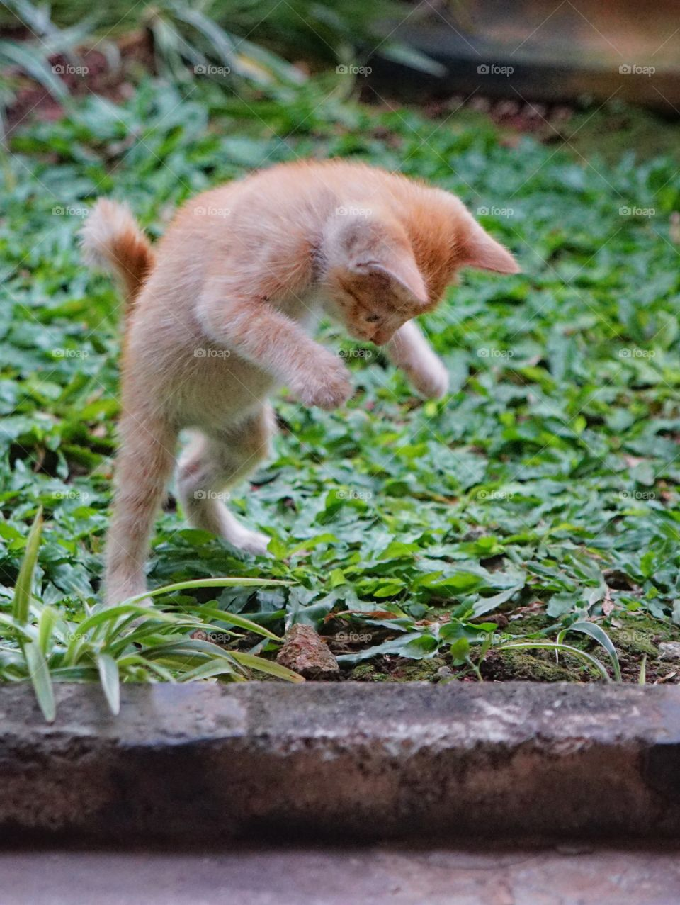 kitten playing alone