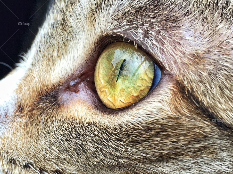 Close-up of a cat eyes