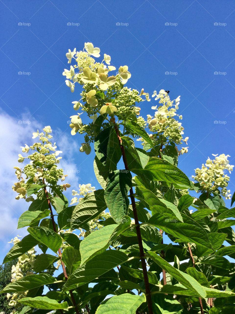 Blue sky and flowers summer garden