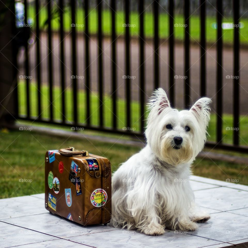 Lilica and the suitcase