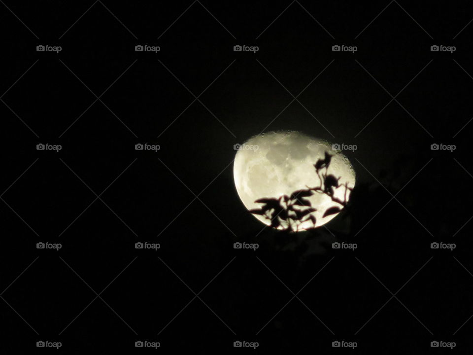 Leafy Covered Moon