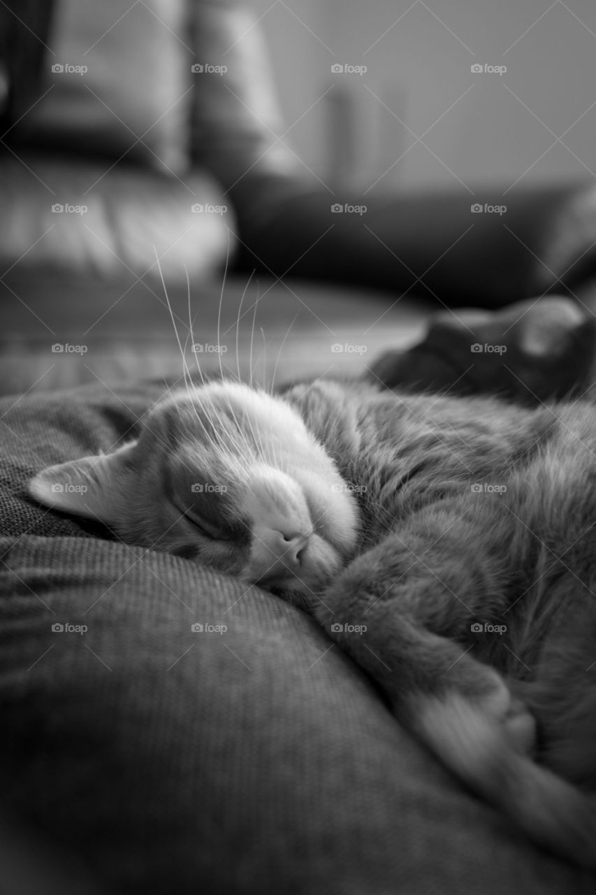 Cute cat relaxing on bed