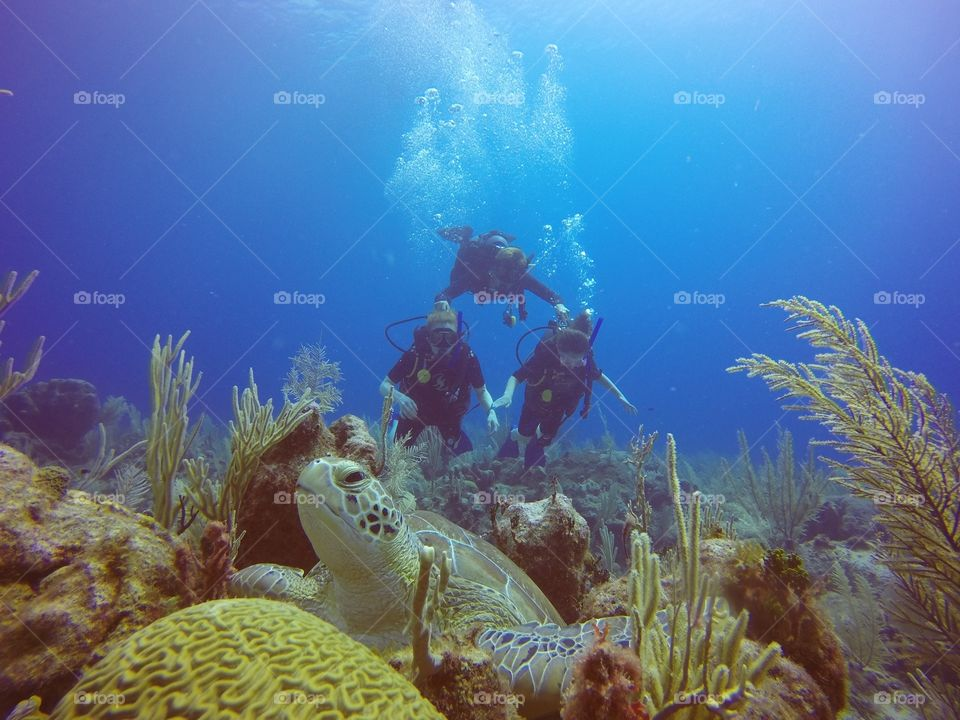 A green sea turtle sneaks up on new divers.