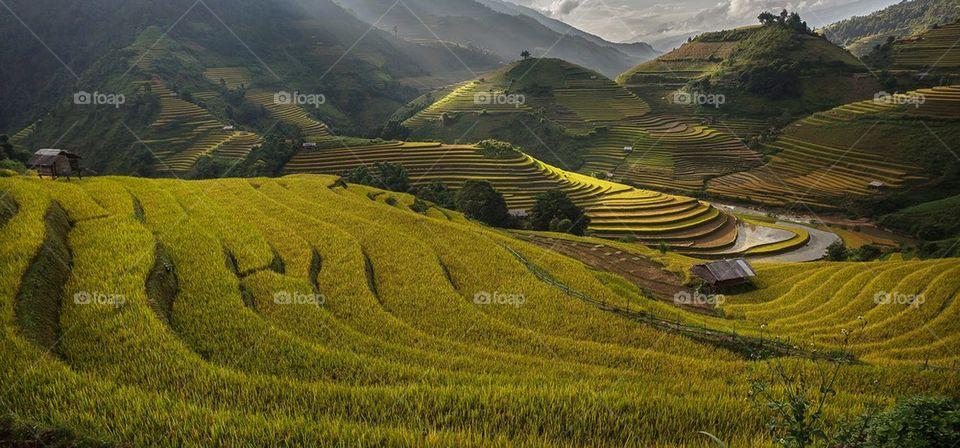 Rice terrace in mu cang chai,Vietnam