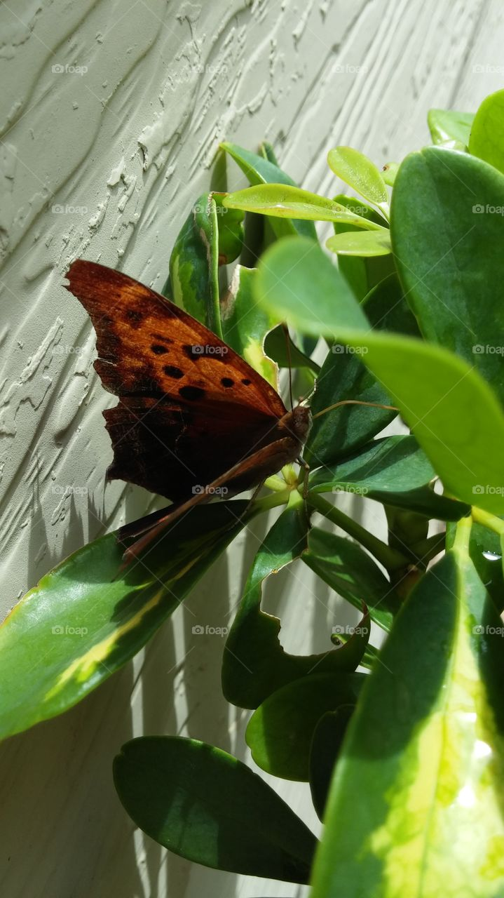 Butterfly Beauty. Beauty is everywhere around us. We just need to take a closer look.