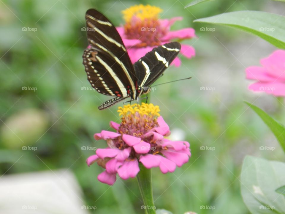 Nature, Butterfly, Insect, Flower, Summer
