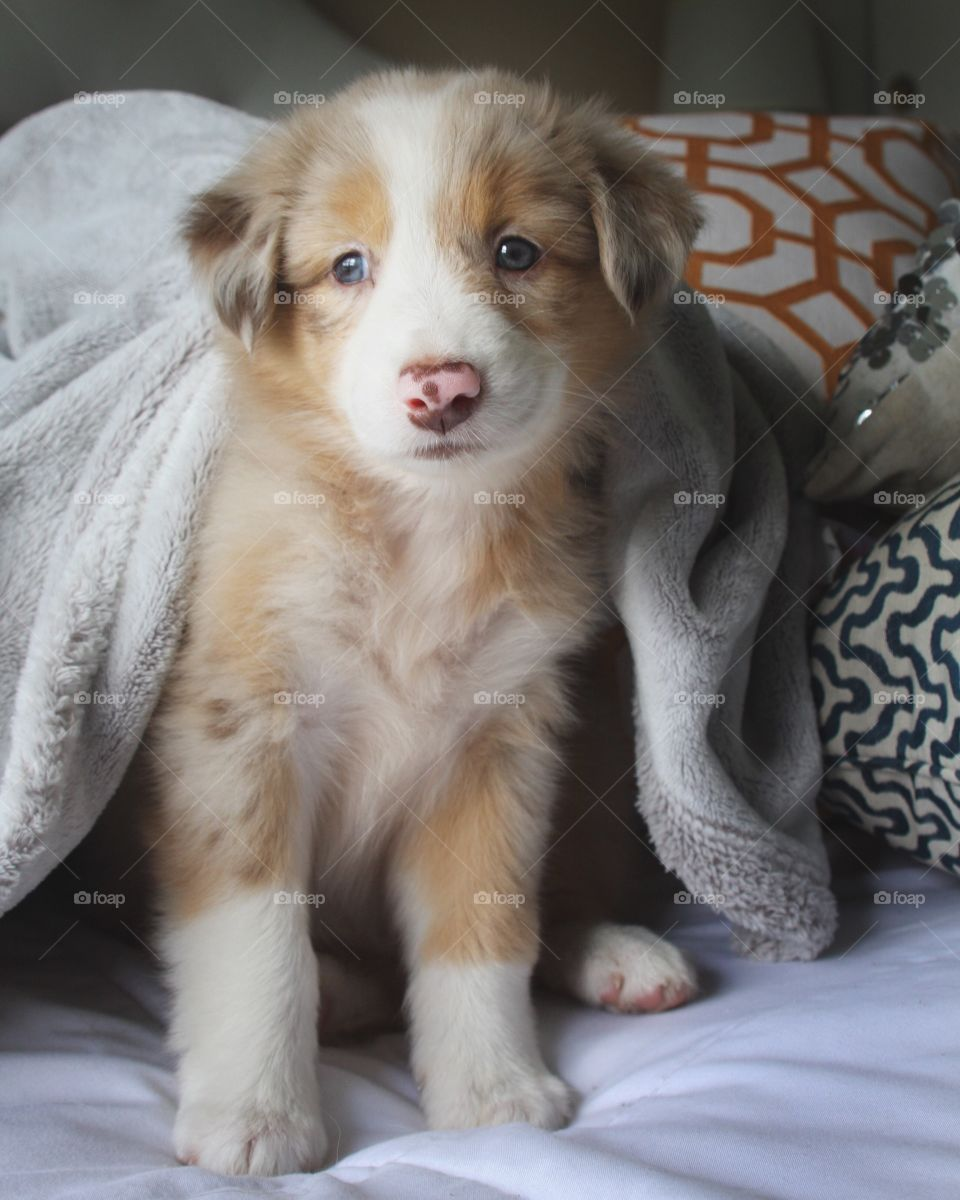 Puppy waking up