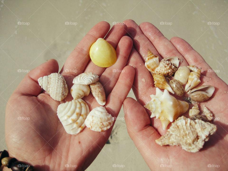 Tropical shells