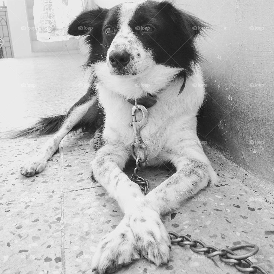puppy sitting style