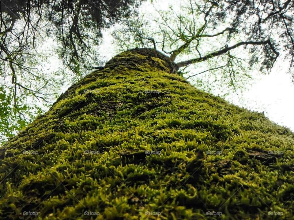 Tree carpet