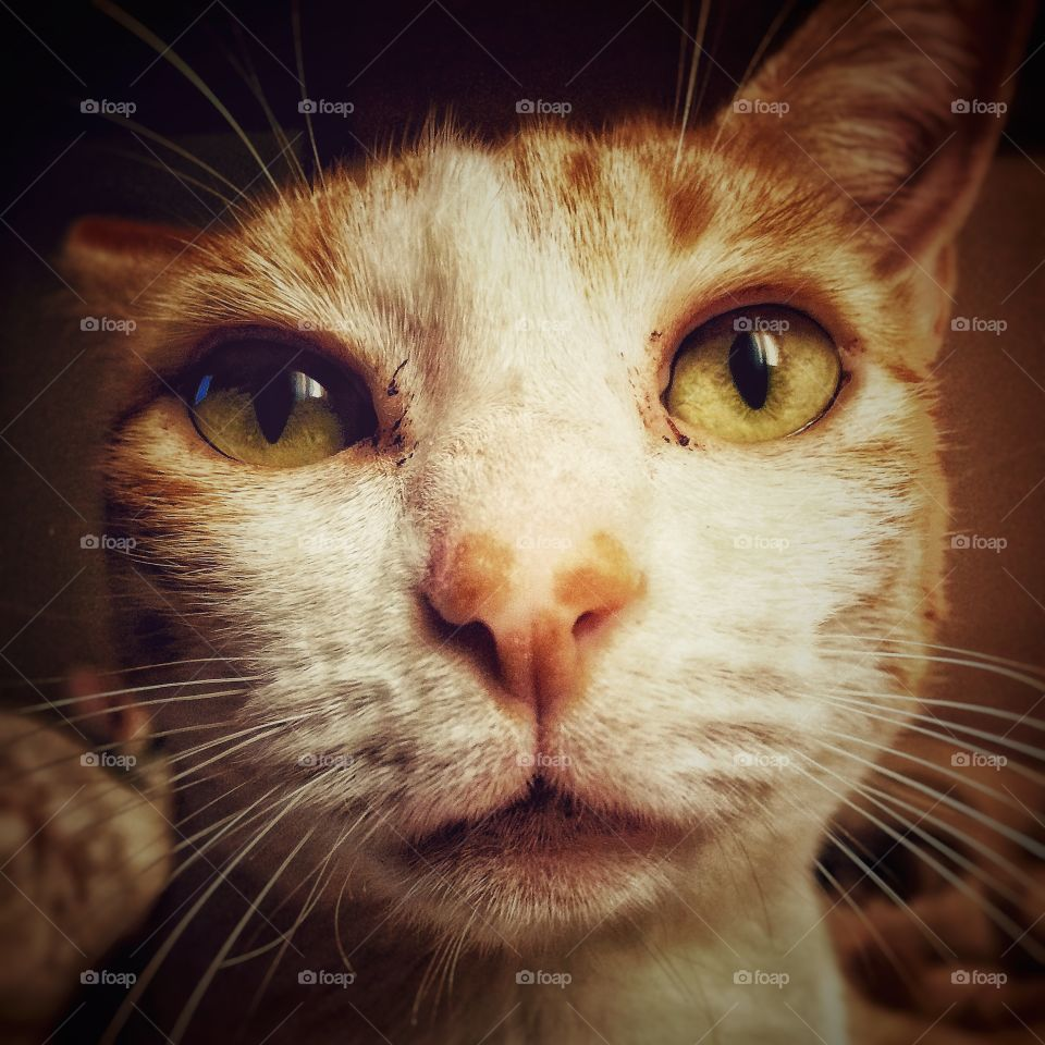 Selfie Cat. A smart cat makink selfie