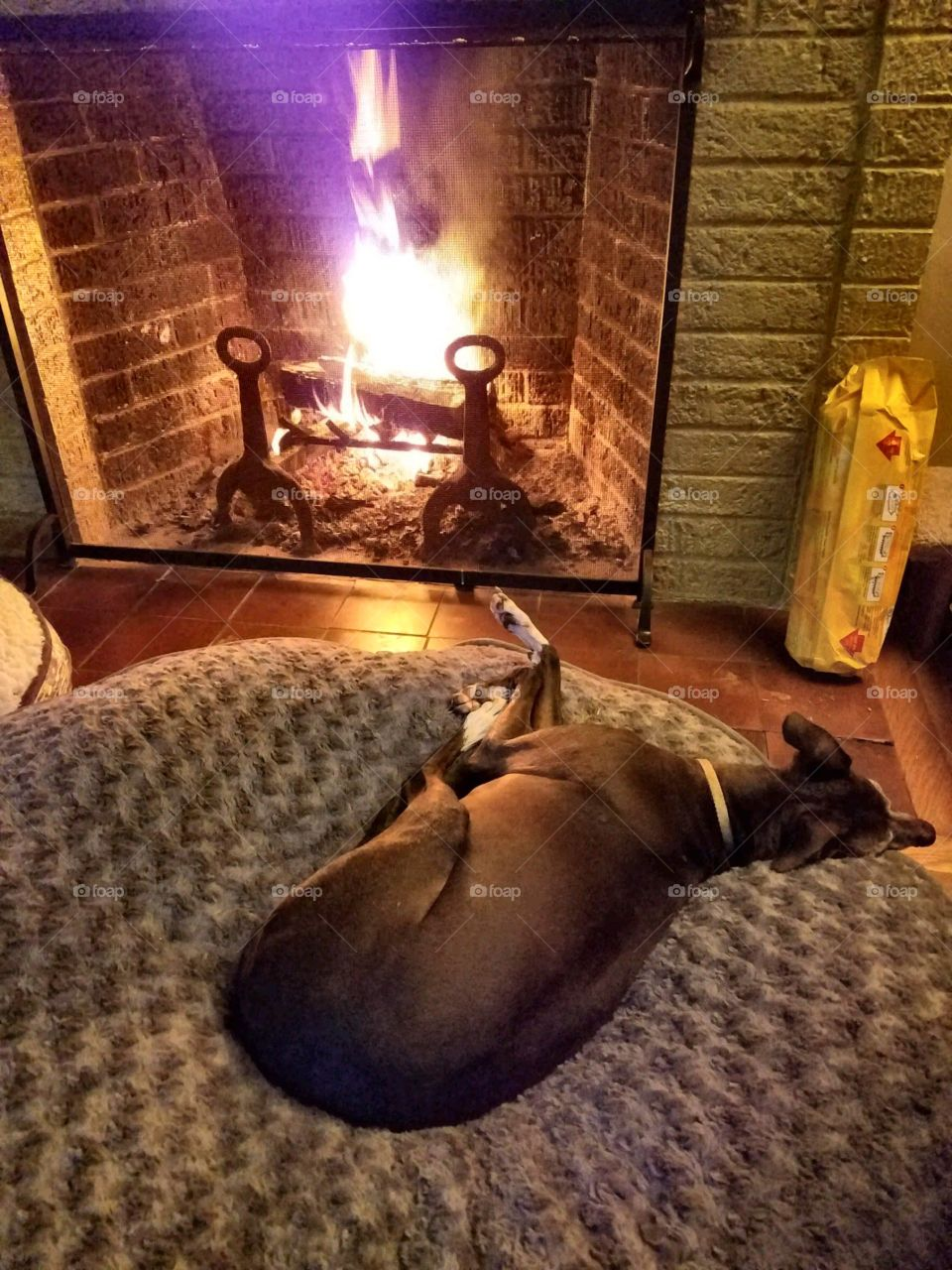 Dog laying on bed in front of burning fireplace.