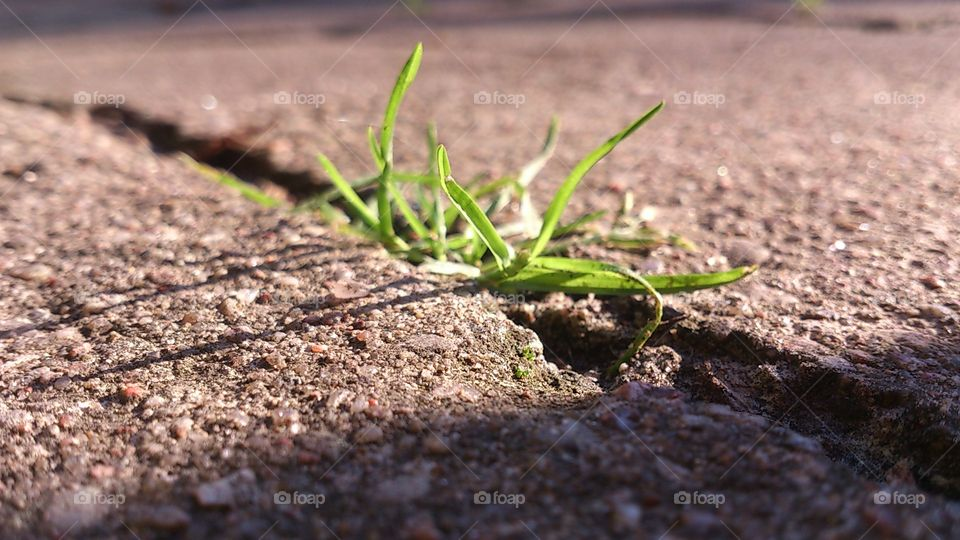 Soil, Ground, Nature, Leaf, No Person