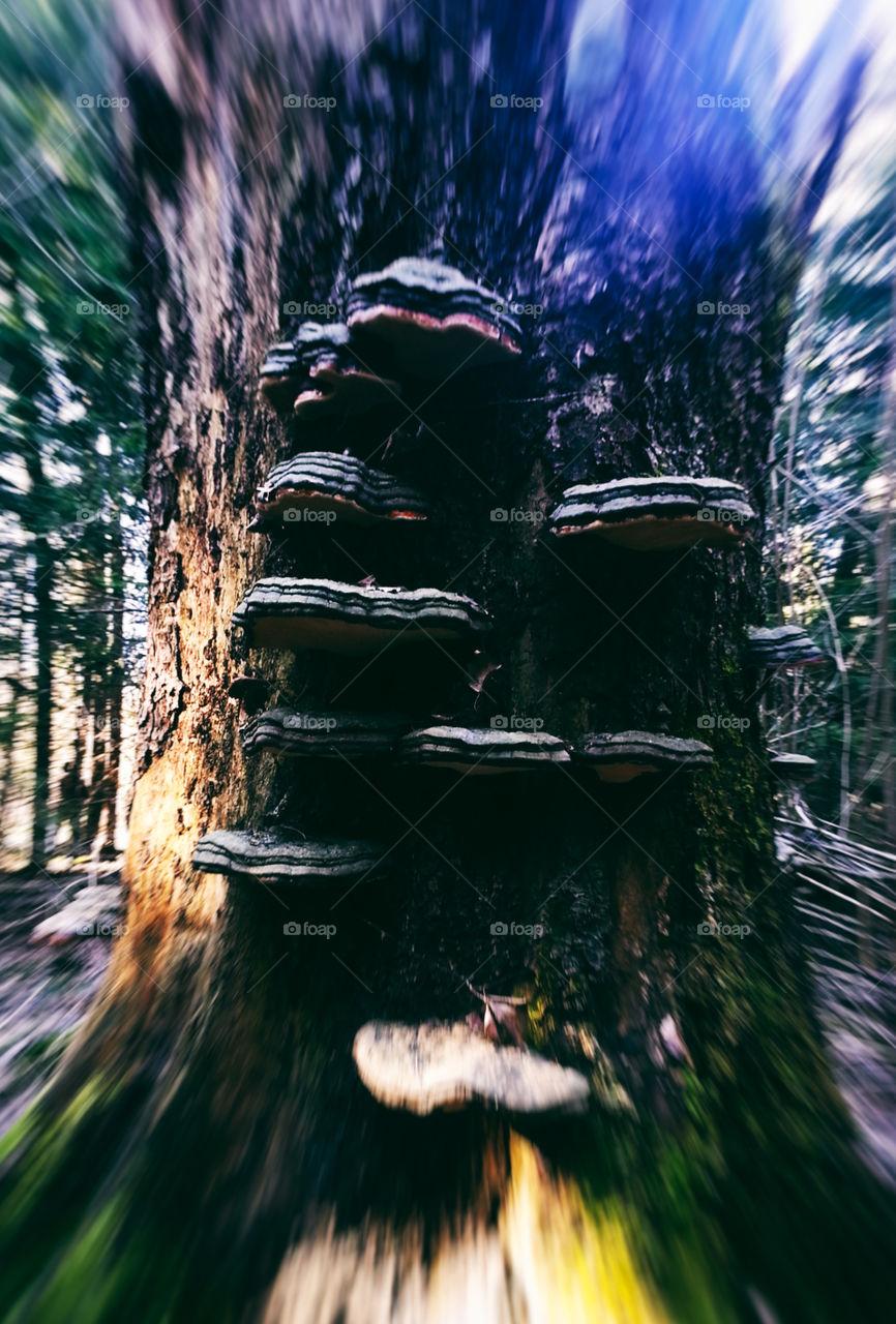 Psyhedelic mushrooms on tree