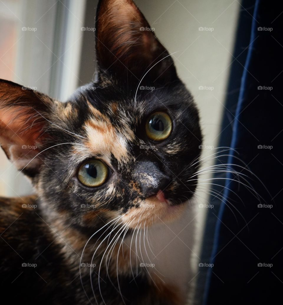 My name is Itty Bit! I was rescued from the flood waters of Hurricane Harvey back in August 2017. I'm a goofy girl, and absolutely love to get my picture taken! My favorite place to sit is in this window, (it brings the color in my eyes out!)
