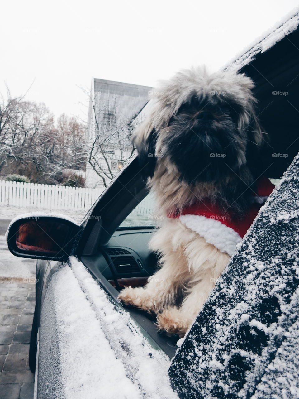 dog wearing chrismas clothing ready for a drive