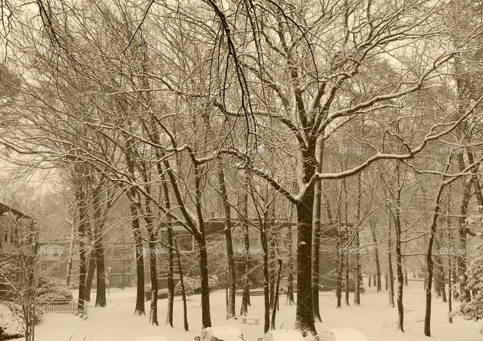 Winter Trees. cool winter days