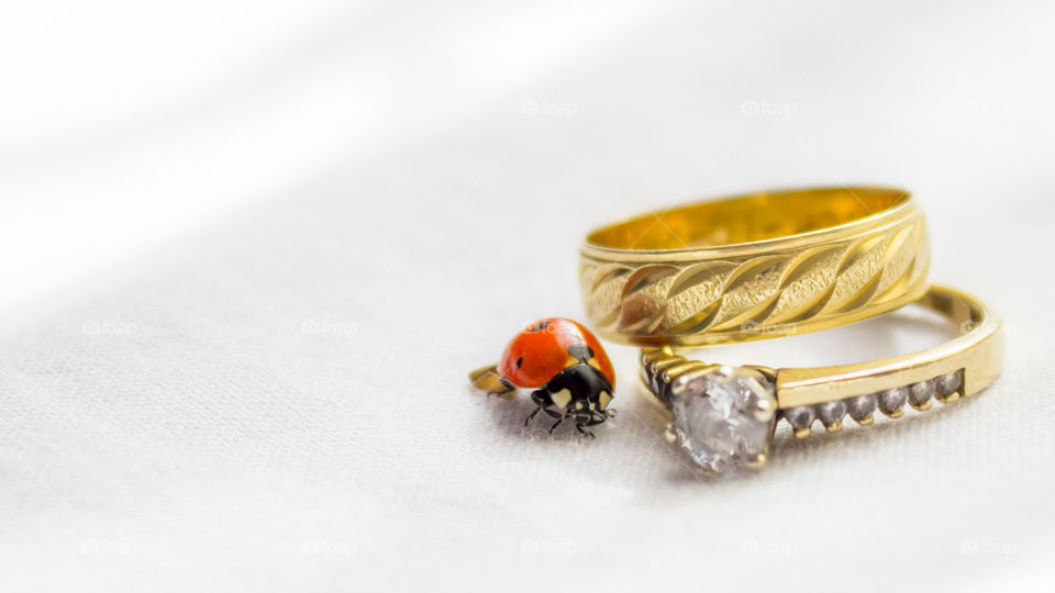 Ladybird next to the ring