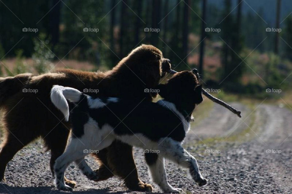 dogs skog liten animals by mufflish