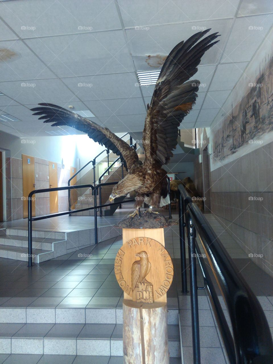 eagle with wide wings in museum