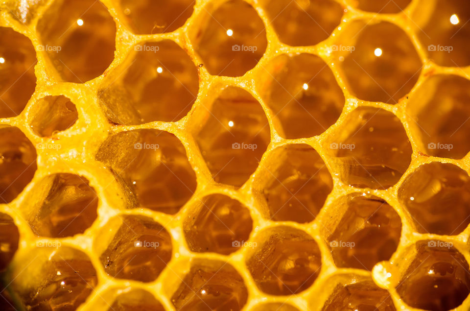 Extreme close-up of honeycomb