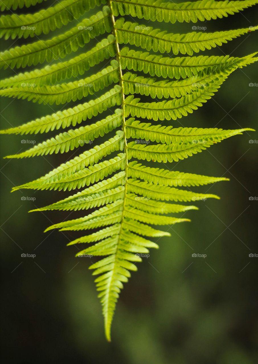 Leaves of fern, sunlight