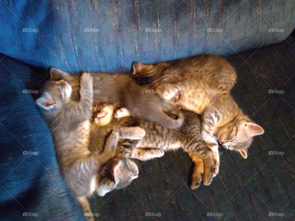 the six pack Kitty pack