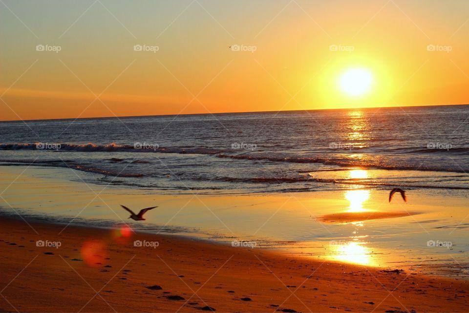 Seagulls in the sunrise.