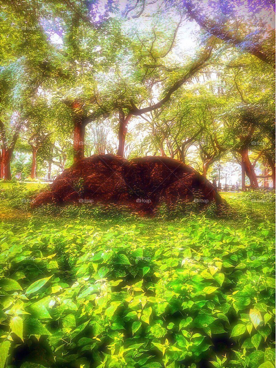 Nature/Landscape, 307th  Infantry Memorial Grove, Central Park, Manhattan, New York City. Instagram,@PennyPeronto