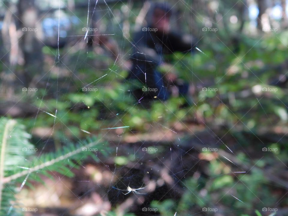 A green story, spider web in the forest