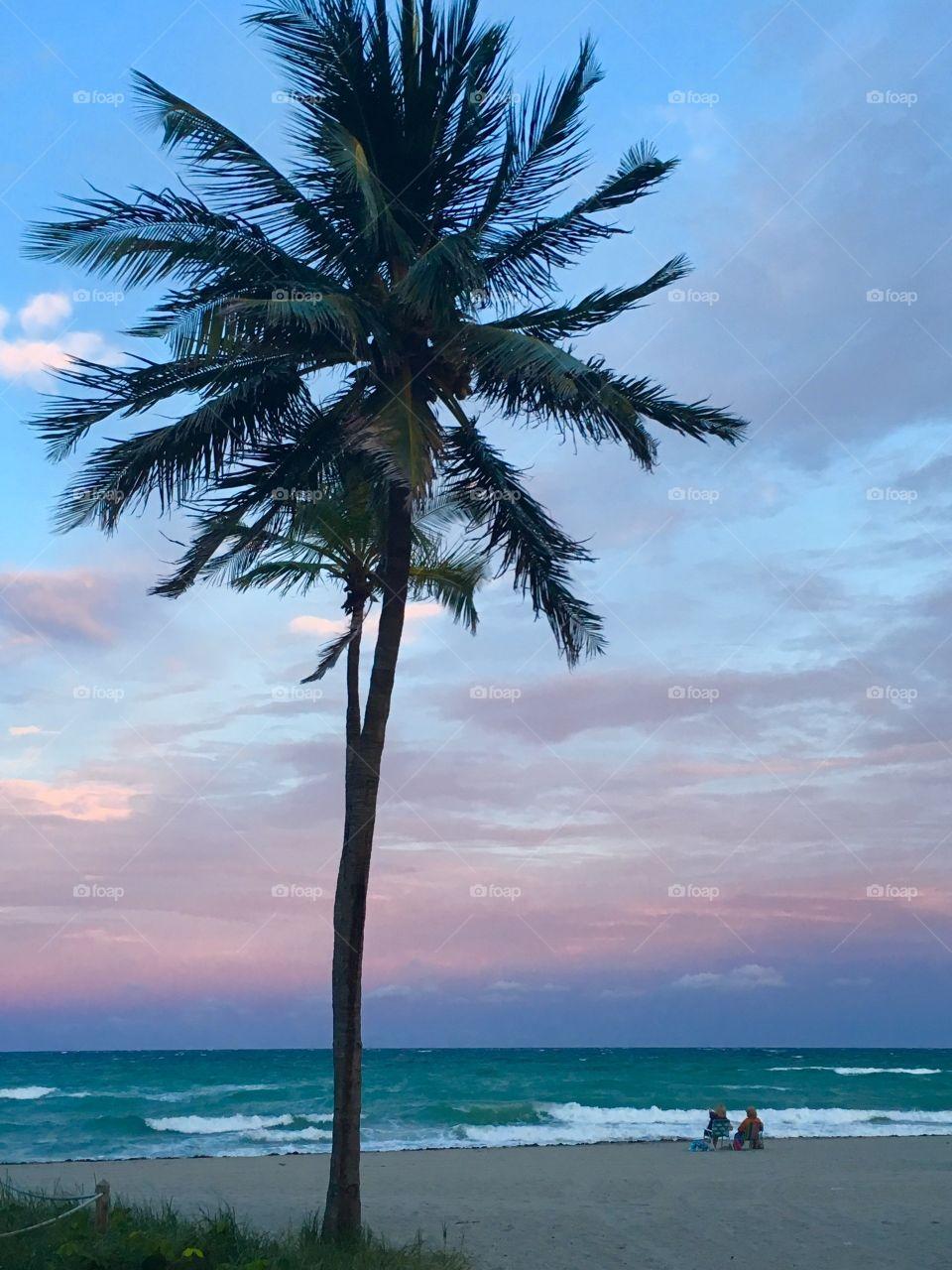Miami beach palm tree at ocean