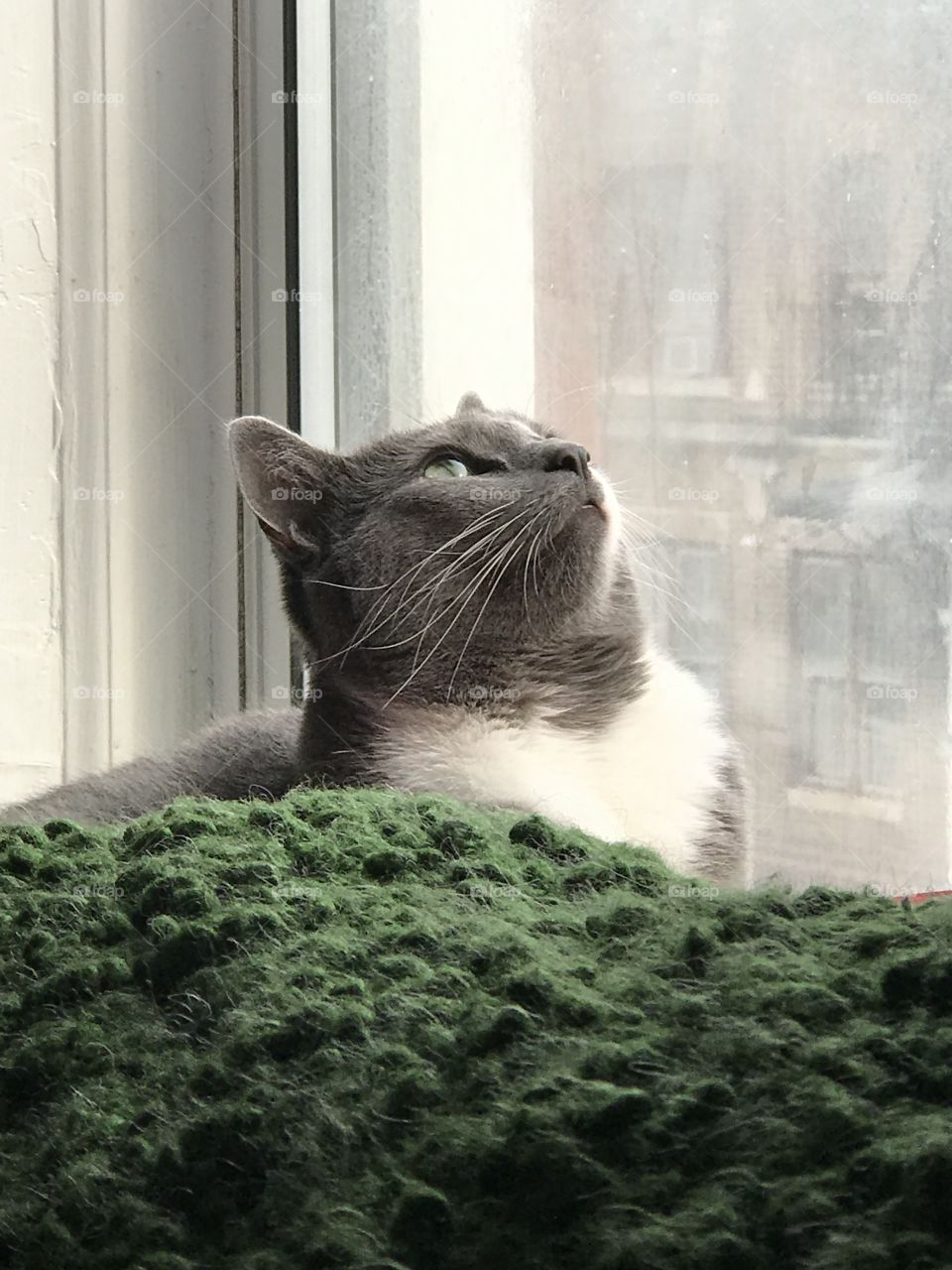 Staring cat in window