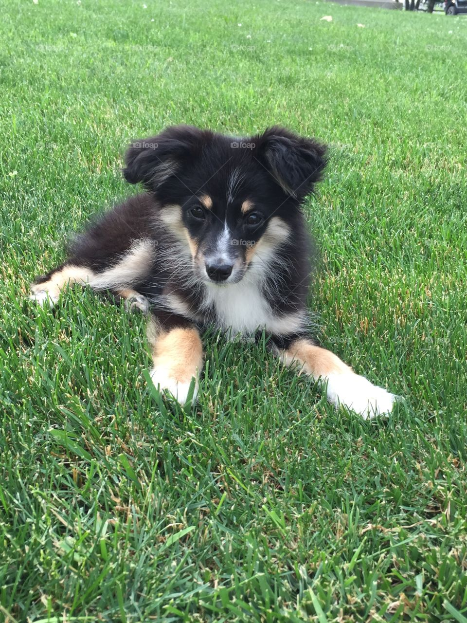 A puppy dog sitting on grass