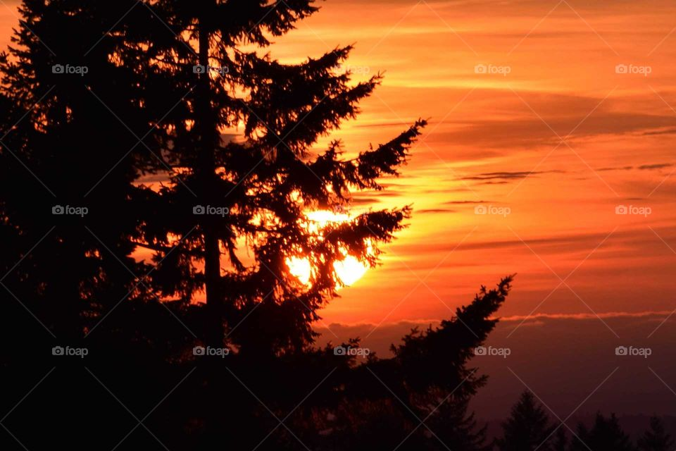 Round red sunset behind trees with clouds 7/3/19