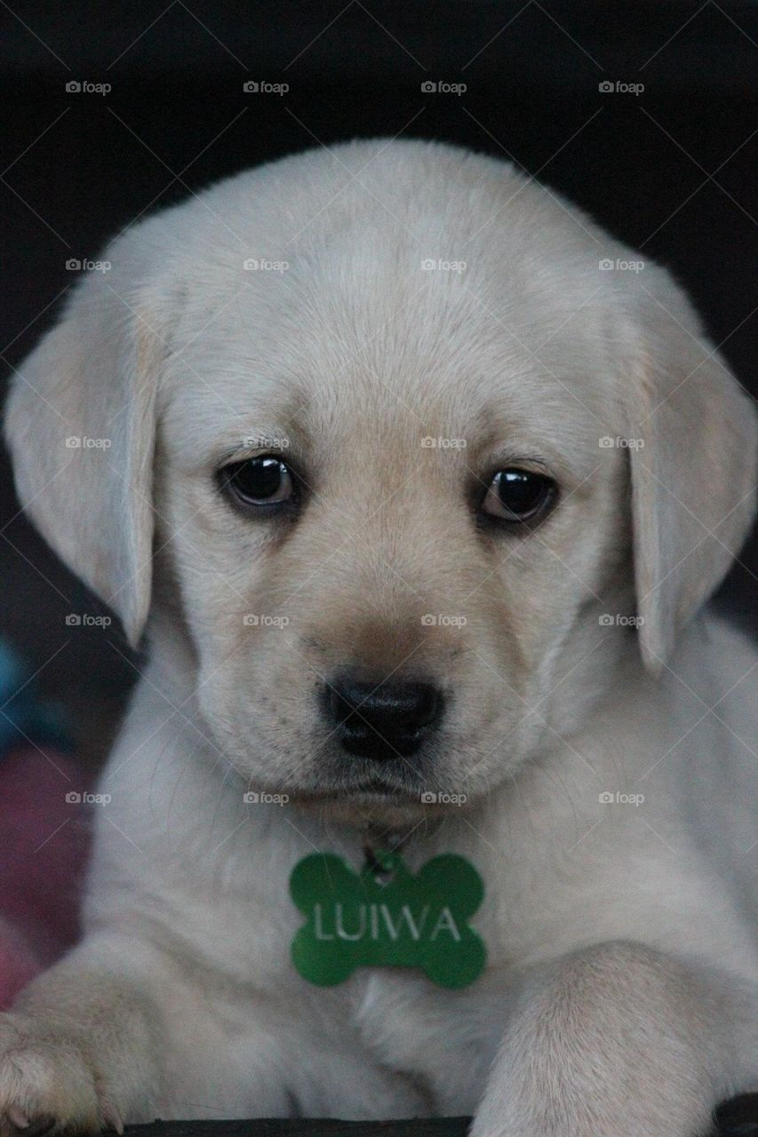 Little Luiwa