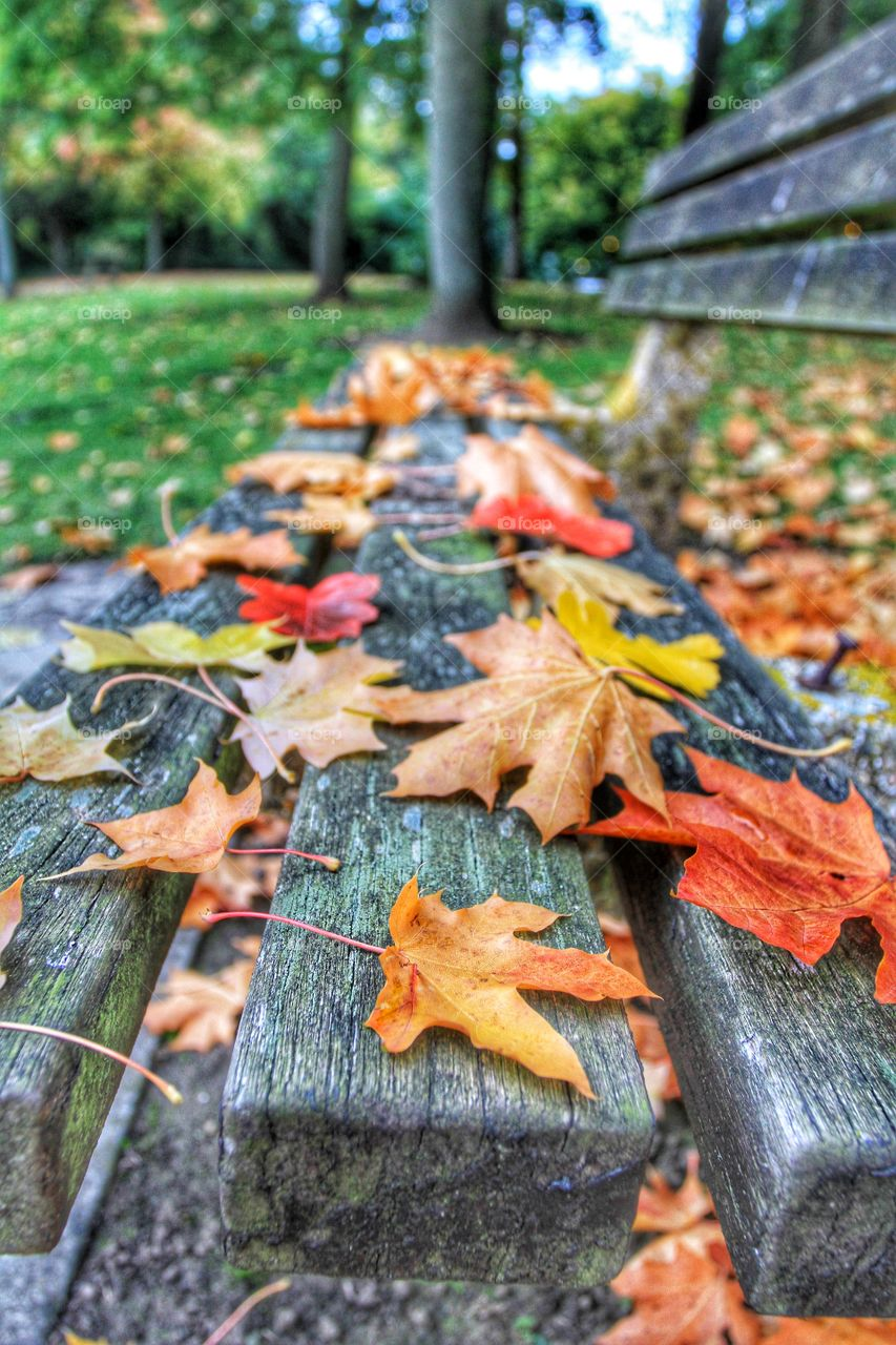 A Park Bench covered in Leaves. A wooden park bench covered in colourful autumnal leaves.