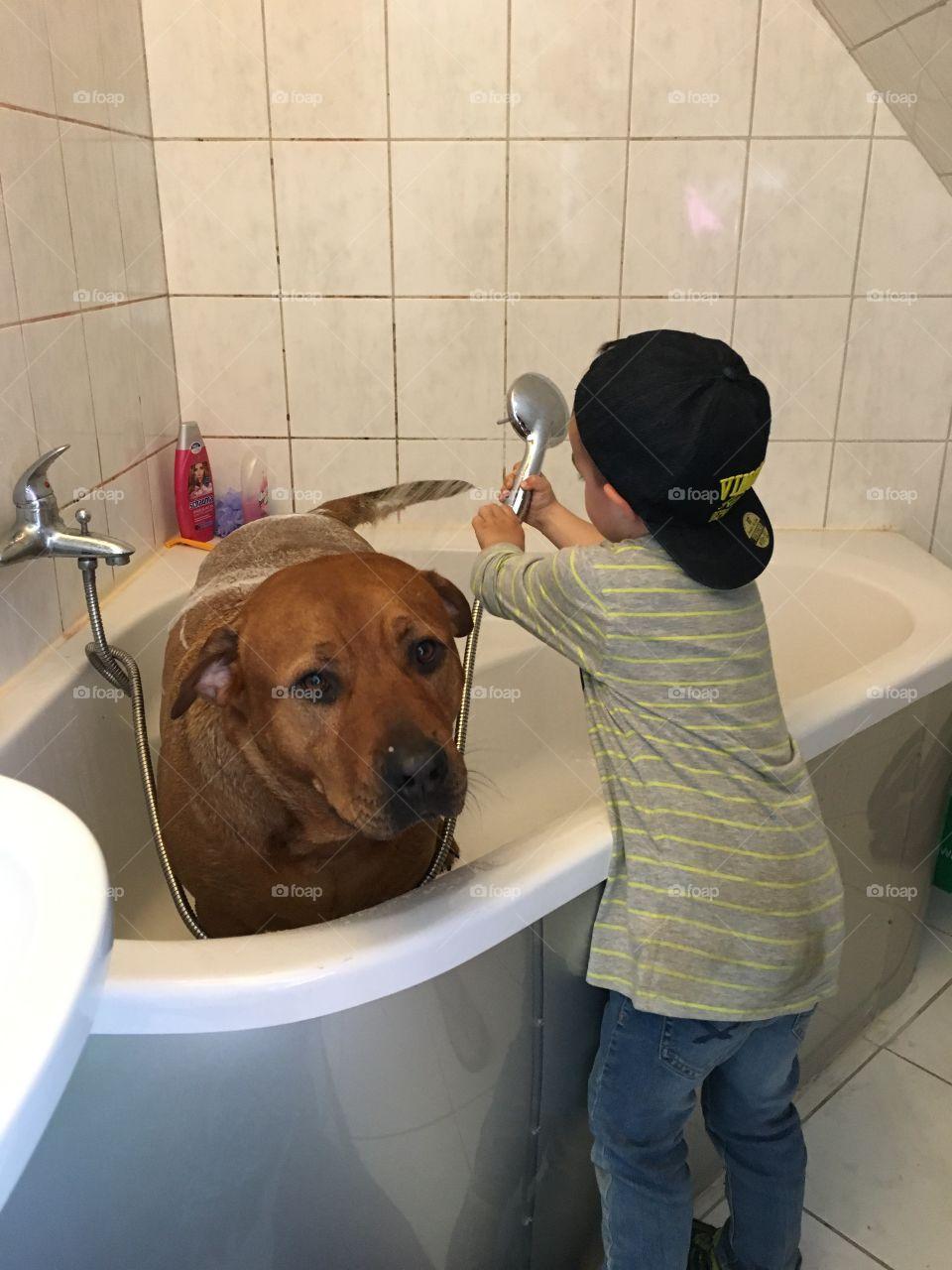 little boy bathes big dog
