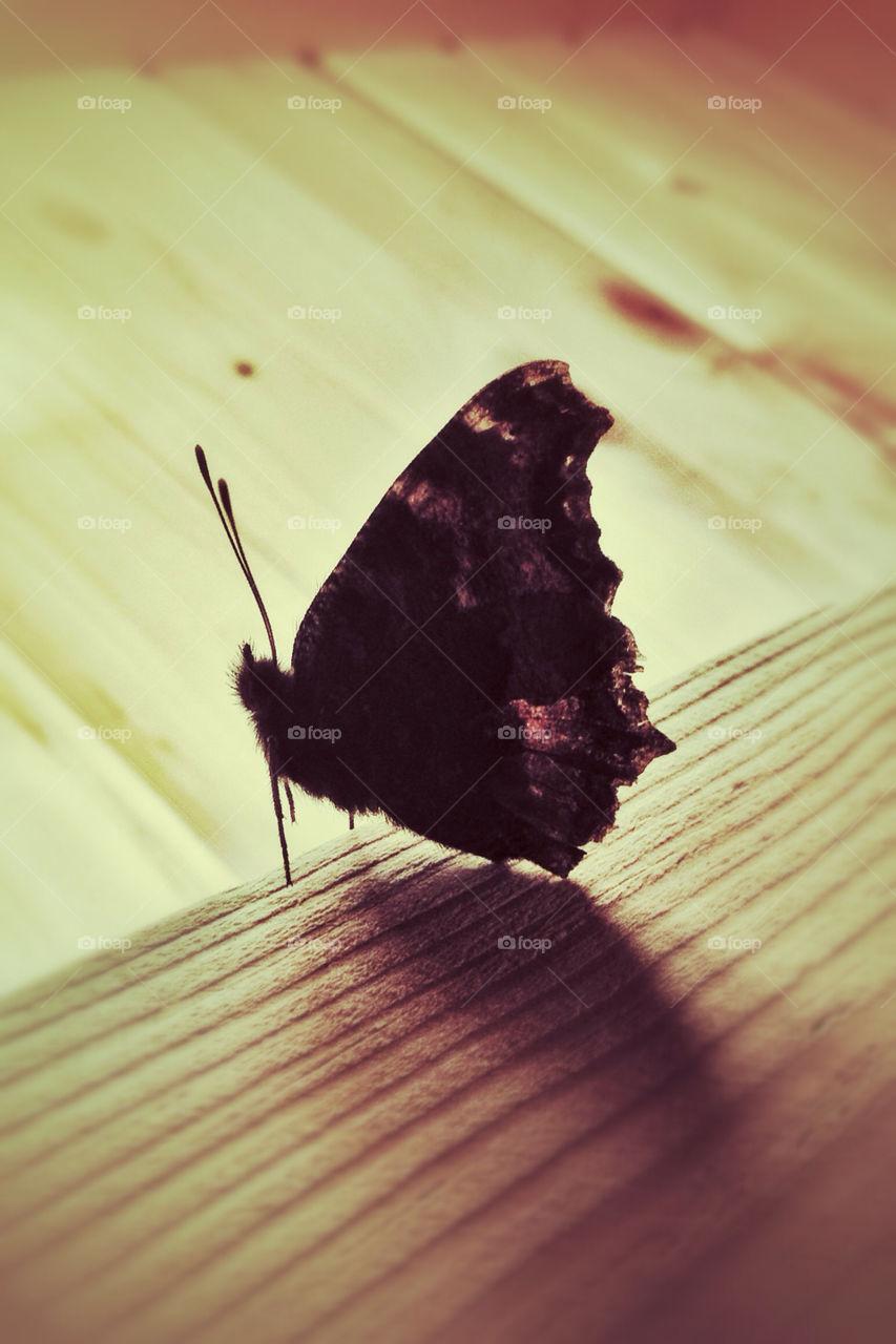 macro butterfly fur by vsusov