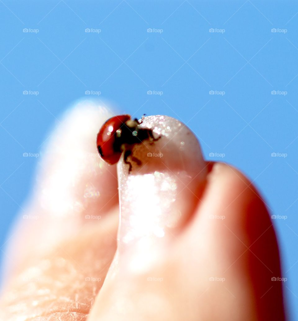 Ladybird on nail
