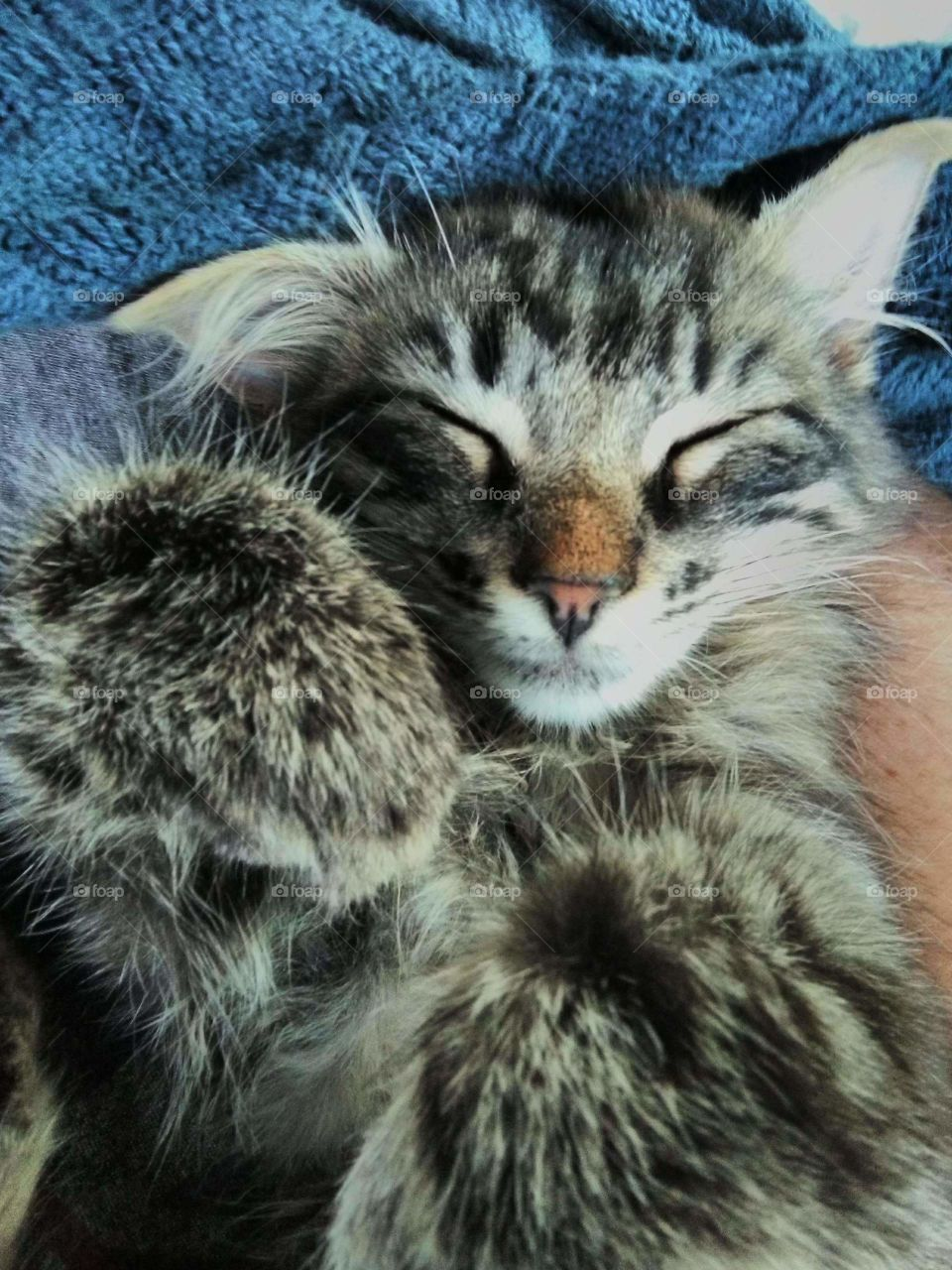 kitty lovin