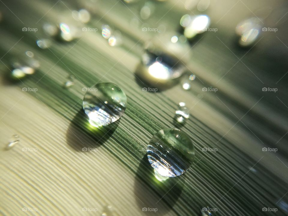 Raindrops in the morning on a large blade of grass