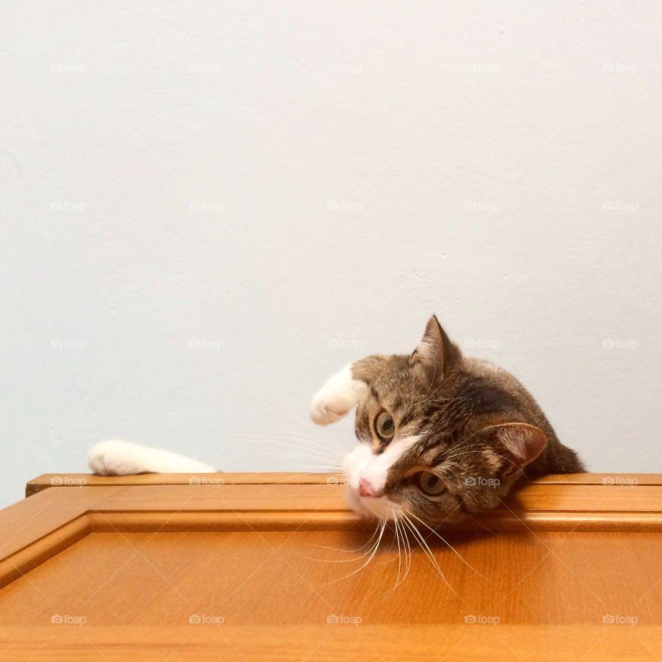 Cat layin'on the kitchen