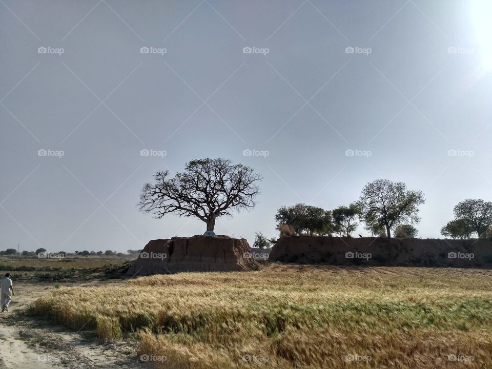 Trees on the mound of soil and clay around