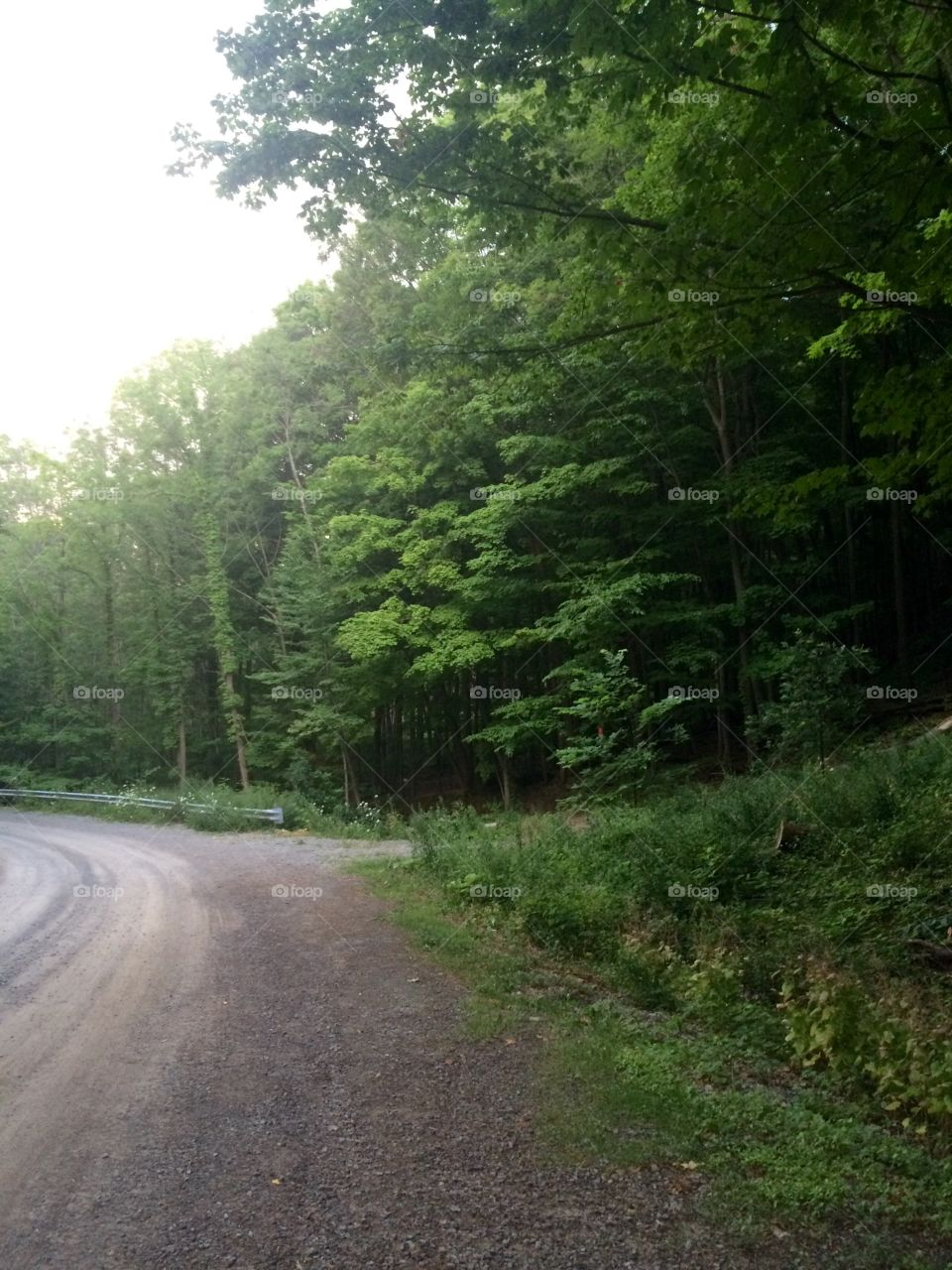 Road tripping through the forest