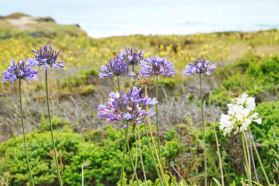 Wildflowers On The California Coast