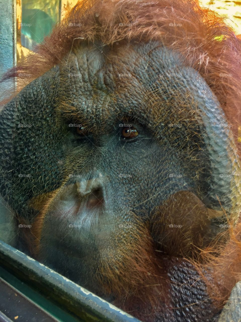 Come Here.  Tama Zoological Park. Tama, Japan