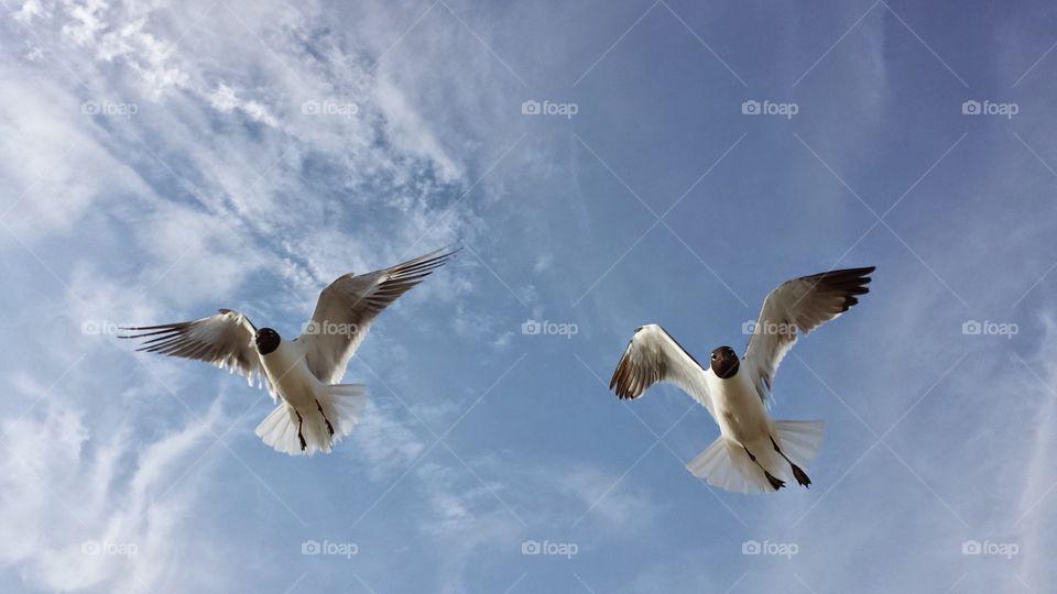 birds landing . Bird feeding
