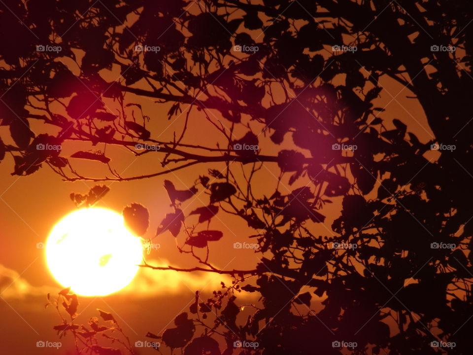 Sunrise seeing through the tree