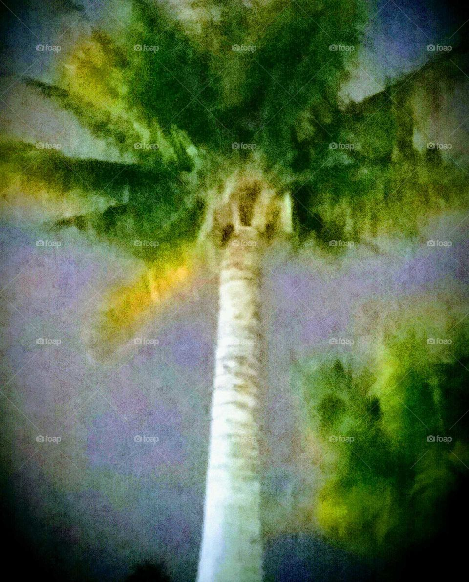 Palm Tree at Night Filtered